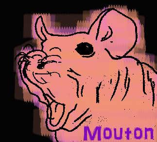 Mouton_USDJPY