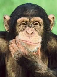 Similar Monkey SWING EURUSD
