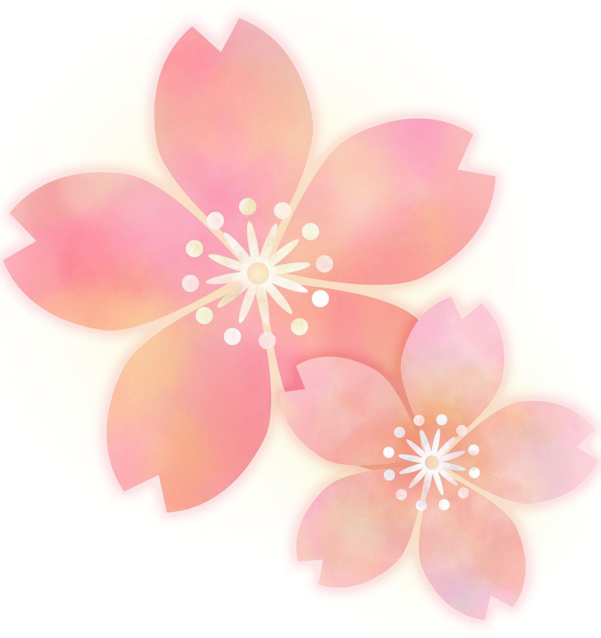 Sakura_USDJPY