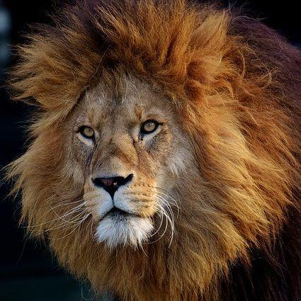 ライオンハート