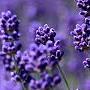 FX_Lavender1_EURJPY_M5