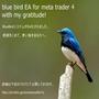 bluebird EA  メタトレーダー4(MT4)専用 自動売買ソフト(EAは2つ同梱)