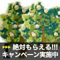 Golden Tree iArbitrage