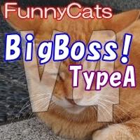 FC_BigBoss!_TypeA